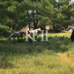 Horse Ranch For Sale