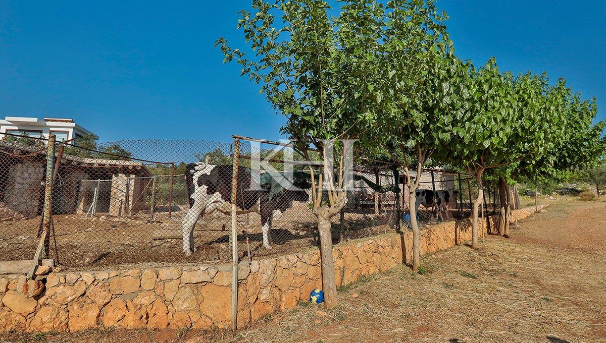 1_0021_İslamlar village villa for sale, commercial property for sale near Kalkan and Patara beach_52A8223